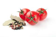 Tomates e especiarias no fundo branco Imagem de Stock