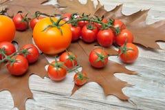 Tomates e folhas de outono maduros em um fundo de madeira imagem de stock