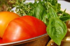 Tomates e hierbas escogidos frescos Fotografía de archivo libre de regalías