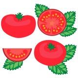 Tomates e ilustração ajustada do vetor da manjericão Imagem de Stock Royalty Free