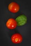 Tomates e manjericão dos produtos orgânicos Fotografia de Stock