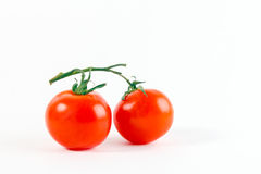 Tomates em um ramo Fotografia de Stock Royalty Free