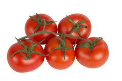 Tomates em um ramo em um fundo branco foto de stock royalty free