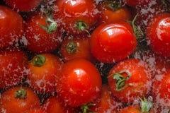 Tomates empapados en agua con las burbujas Imagen de archivo libre de regalías