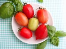 Tomates en été Image stock