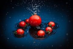 Tomates en agua Fotos de archivo libres de regalías