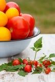 Tomates en cuvette en métal et tomates-cerises dans le jardin le jour ensoleillé Images stock