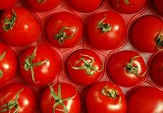 Tomates en el embalaje Fotografía de archivo libre de regalías