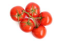 Tomates en el fondo blanco Imagenes de archivo