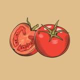 Tomates en estilo del vintage Ilustración coloreada del vector Imágenes de archivo libres de regalías