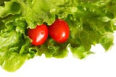 Tomates en hojas de la lechuga Imágenes de archivo libres de regalías