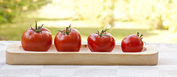 Tomates en la placa de madera Foto de archivo libre de regalías