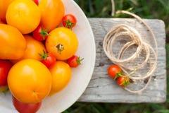 Tomates en la placa en un jardín Imagenes de archivo