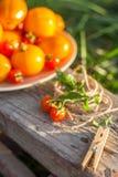 Tomates en la placa en un jardín Imágenes de archivo libres de regalías