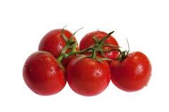 Tomates en la rama Imagen de archivo