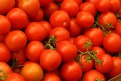 Tomates en la ramificación Fotografía de archivo