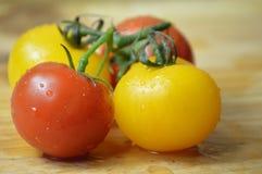 Tomates en la vid Foto de archivo