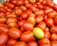 Tomates en mercado brasileño Imágenes de archivo libres de regalías