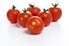 Tomates en un fondo blanco Imágenes de archivo libres de regalías