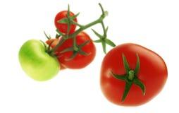 Tomates en un fondo blanco Imagen de archivo libre de regalías