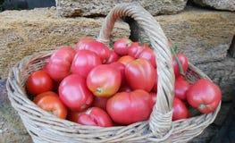 Tomates en una cesta de mimbre Foto de archivo libre de regalías