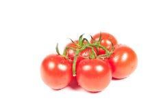 Tomates en una rama Foto de archivo libre de regalías