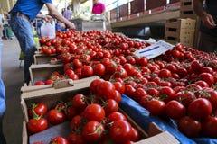 Tomates en vente dans un bazar Images stock
