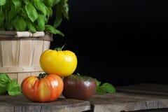 Tomates et Basil d'héritage images libres de droits