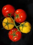 Tomates et citrons sur la même branche images libres de droits