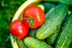 Tomates et concombres mûrs rouges fraîchement sélectionnés Photographie stock