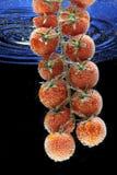 Tomates et frais photographie stock