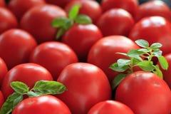 Tomates et lames de basilic Photographie stock