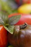 Tomates et lames mélangées de basilic. Photographie stock