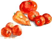 Tomates et poivre illustration d'aquarelle sur le backgrund blanc Vecteur illustration stock