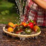 Tomates et poivrons dans une cuvette photographie stock
