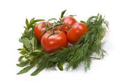 Tomates et verts Photographie stock libre de droits