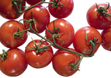 Tomates et vignes. D'isolement Photographie stock