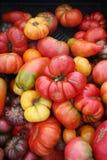 Tomates formados impares Fotografía de archivo libre de regalías