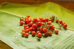 Tomates fraîchement cuites tout préparées images stock