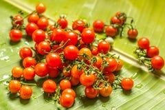 Tomates fraîchement cuites tout préparées image libre de droits