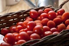 Tomates fraîchement lavées de vigne image libre de droits