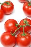 Tomates fraîches Photo stock