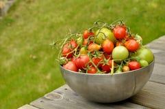 Tomates fraîches Images libres de droits