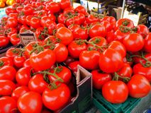 Tomates fraîches Image stock