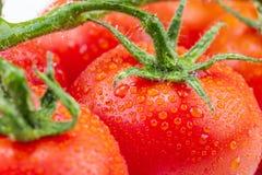 Tomates fraîches avec les feuilles vertes sur le fond blanc image stock