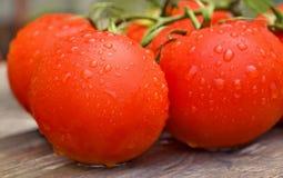 Tomates fraîches dans les gouttes de l'eau sur un panneau Photographie stock libre de droits