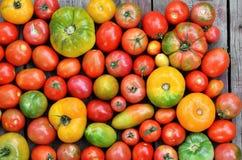 Tomates fraîches de ferme de degré différent de maturité photographie stock libre de droits