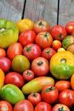Tomates fraîches de ferme de degré différent de maturité photographie stock