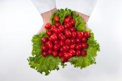 Tomates fraîches de raisin Images libres de droits