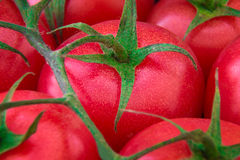 Tomates fraîches mûres Photo stock
